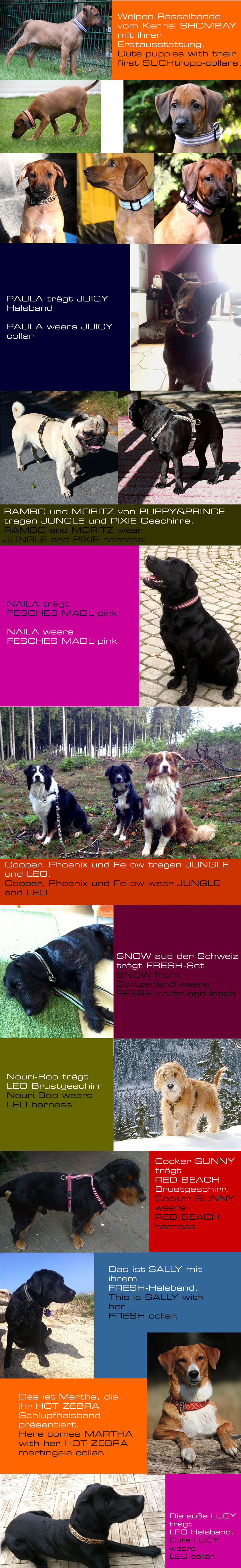 Happy_customers,_Suchtrupp,_Hundehalsbaender,_Hundeleinen,_Brustgeschirre,_dog_collars,_dog_leashes_4_Kopie
