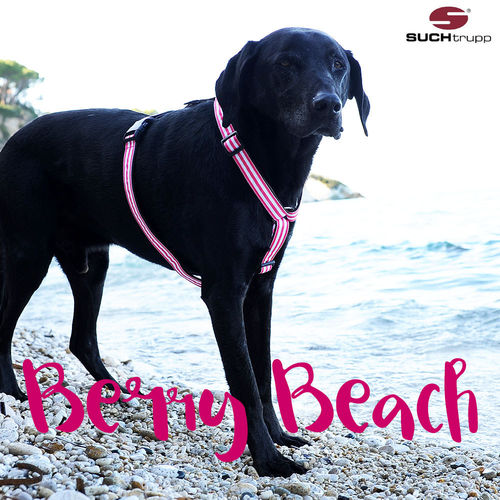 Hundegeschirr, Brustgeschirr BERRY BEACH large