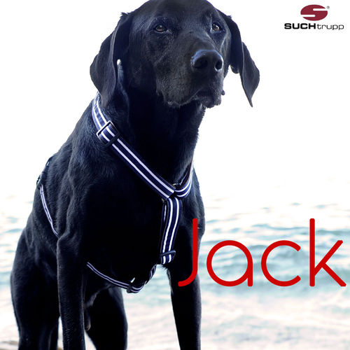 Hundegeschirr, Brustgeschirr JACK large