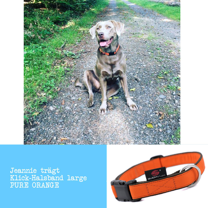 Jeannie-hundehalsband-pure-orange-suchtrupp