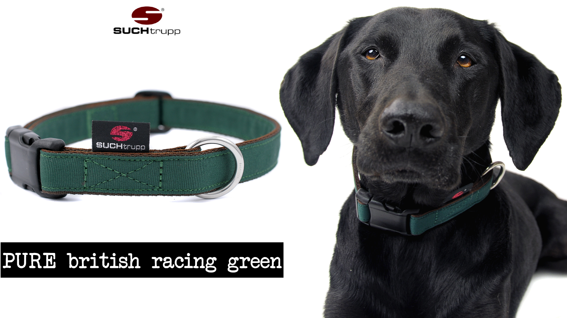 PURE_BRITISH_RACING_GREEN,_Hundehalsband_l,_SUCHtrupp,_ben